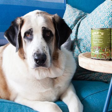 Proper Food for your Four-Legged Family
